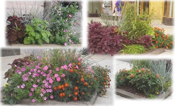 64th-and-cottage-flower-beds-2014-v3